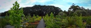 native plant nursery western australia