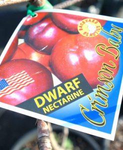 dwarf Nectarine Crimson Baby