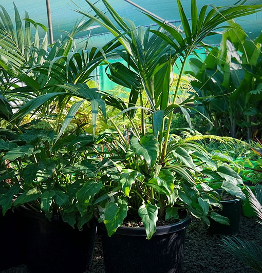 patio-planter-30cm-pots