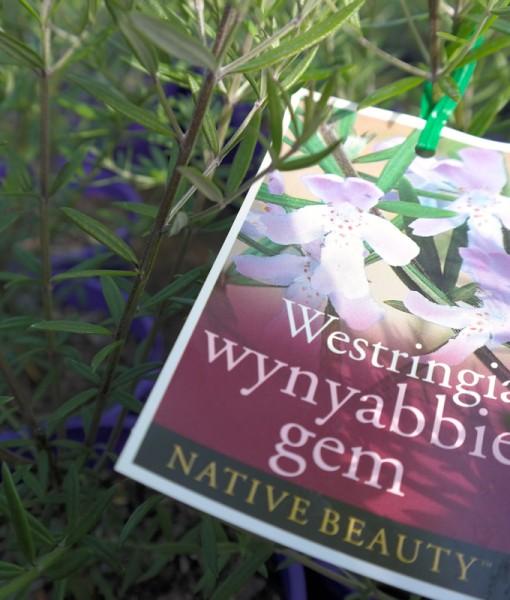 westringea-wynyabbie-gem