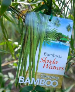 Bamboo Slender Weavers