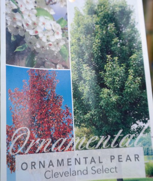 Small Ornamental Trees Oregon: Lakeside Plants & Nursery