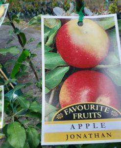 apple jonathon