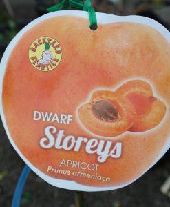 Apricot Storeys dwarf