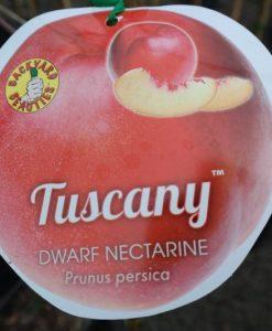 Nectarine dwarf Tuscany