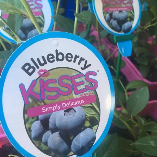 blue berry kisses