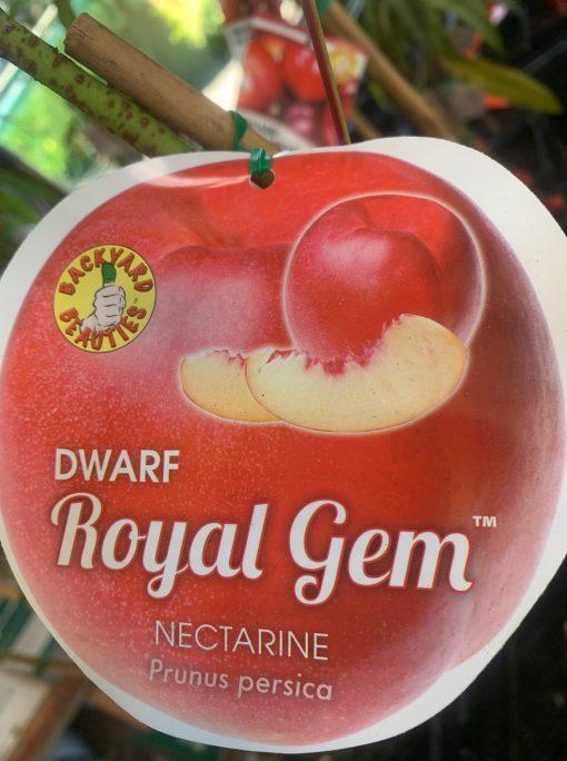 nectarine dwarf royal gem