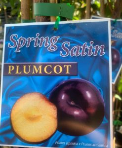Plumcott-Spring-Satin