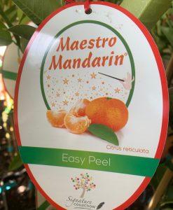 Maestro Mandarin
