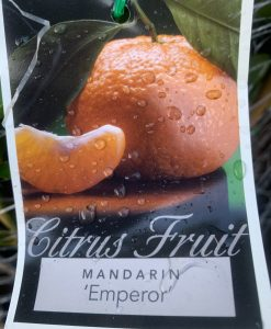 Mandarin Emperor