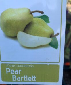 Pear Bartlett Williams