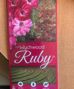 Wychwood Ruby Crab Apple