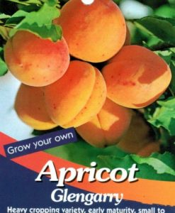 Apricot Glengarry lable