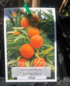 mandarin clementine fina