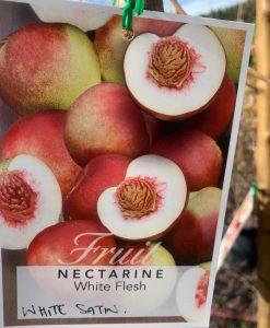 Nectarine White Satin