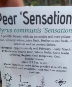 Pear Sensation Label
