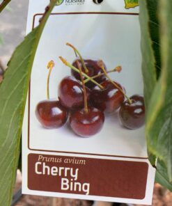 Cherry Bing tag